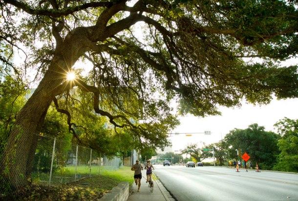 1jwj-trees-00318
